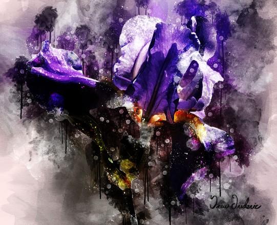 Jos Iris Macro Watercolor B